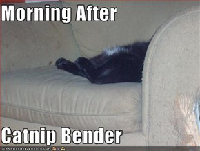 Morning After  Catnip Bender