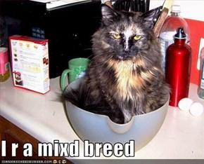 I r a mixd breed