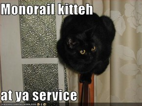 Monorail kitteh   at ya service