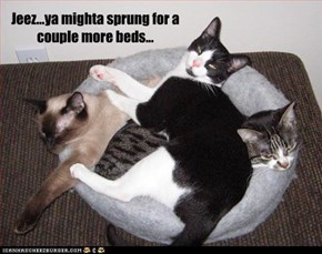Jeez...ya mighta sprung for a couple more beds...