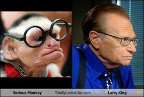 Serious Monkey Totally Looks Like Larry King