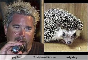 guy fieri Totally Looks Like hedg ehog