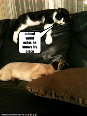 animal world order, he knows his place