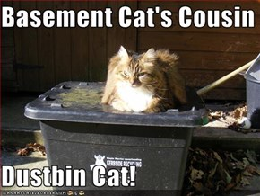Basement Cat's Cousin  Dustbin Cat!