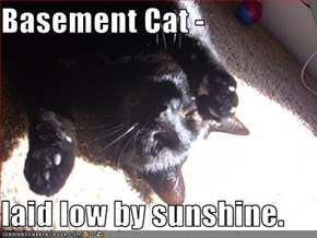 Basement Cat -  laid low by sunshine.