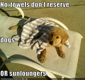 No, towels don't reserve dogs OR sunloungers.