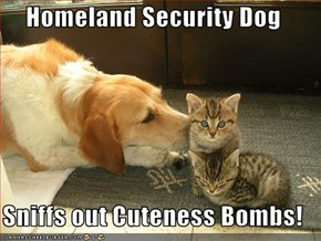 Homeland Security Dog  Sniffs out Cuteness Bombs!