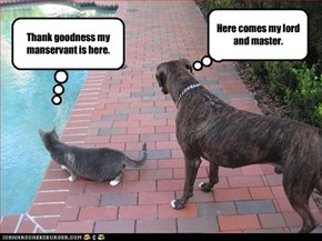 cat and dog viewpoints