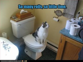 So many rolls, so little time.