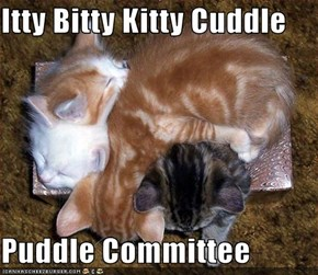Itty Bitty Kitty Cuddle  Puddle Committee