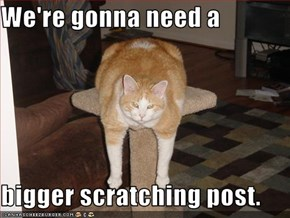 We're gonna need a  bigger scratching post.