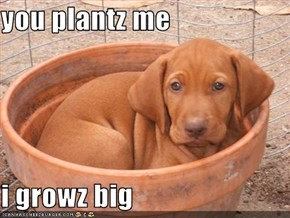 you plantz me  i growz big