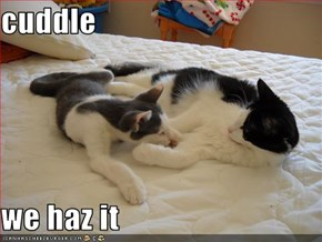 cuddle  we haz it