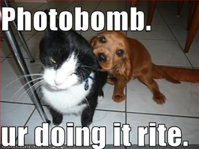 Photobomb.  ur doing it rite.