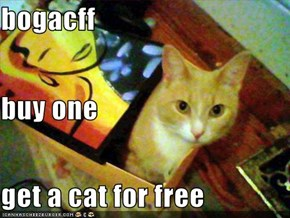bogacff buy one get a cat for free