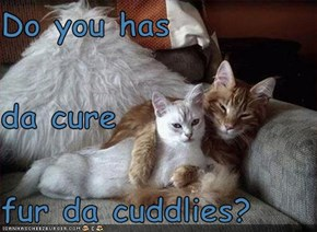 Do you has da cure fur da cuddlies?