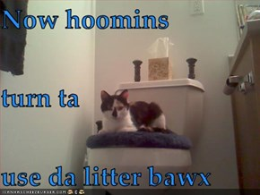 Now hoomins turn ta use da litter bawx