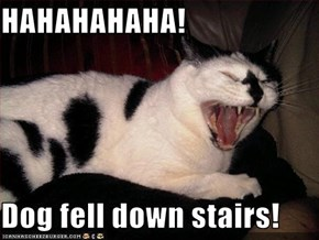 HAHAHAHAHA!  Dog fell down stairs!