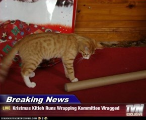 Breaking News - Kristmas Kitteh Runs Wrapping Kommittee Wragged