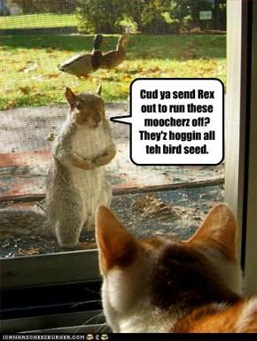 Cud ya send Rex out to run these moocherz off? They'z hoggin all teh bird seed.