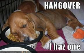 HANGOVER  I haz one