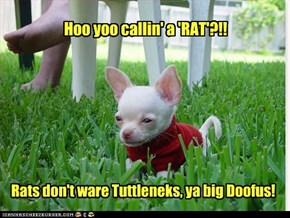 Hoo yoo callin' a 'RAT'?!!
