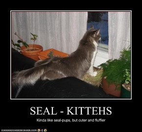 SEAL - KITTEHS