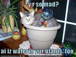 y r so mad?     ai iz waterin yur plants, too.