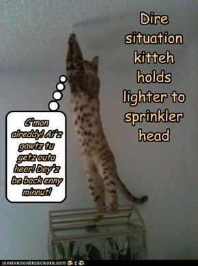 Dire situation kitteh holds lighter to sprinkler head