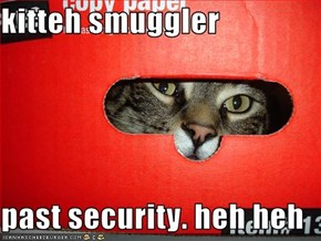 kitteh smuggler  past security. heh heh