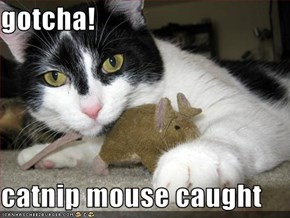 gotcha!  catnip mouse caught