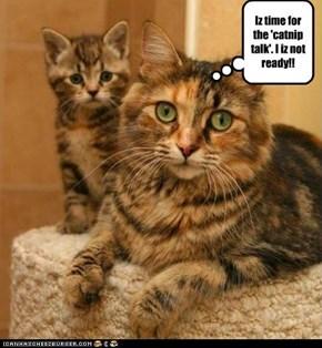 Iz time for the 'catnip talk'. I iz not ready!!