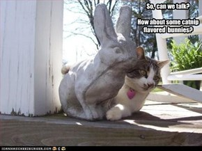 So,  can we talk?  How about some catnip flavored  bunnies?