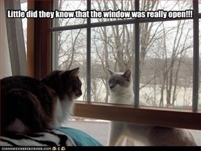 Little did they know that the window was really open!!!