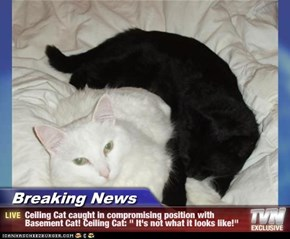 "Breaking News - Ceiling Cat caught in compromising position with Basement Cat! Ceiling Cat: "" It's not what it looks like!"""