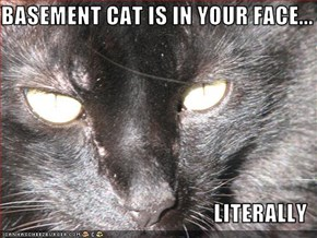 BASEMENT CAT IS IN YOUR FACE...  LITERALLY