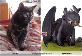 this cat Totally Looks Like Toothless