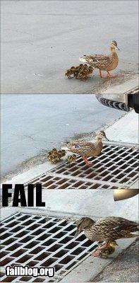 duck fail