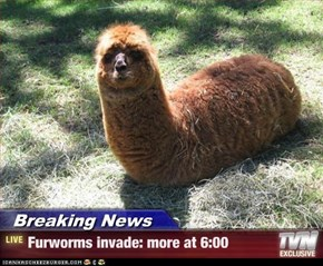 Breaking News - Furworms invade: more at 6:00