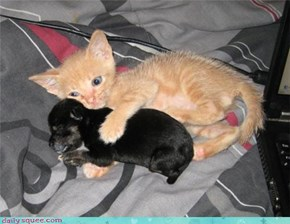 That Kitten Is Going To Pay When Puppy Gets Bigger