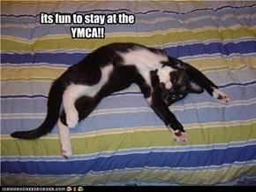 YMCA kitteh