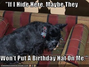 """If I Hide Here, Maybe They  Won't Put A Birthday Hat On Me."""