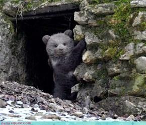 Hey Thar Bear