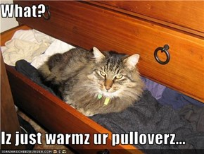 What?  Iz just warmz ur pulloverz...