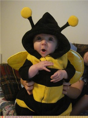 Most Harmless Bumblebee Ever