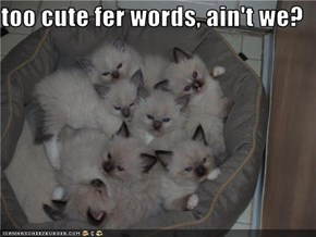 too cute fer words, ain't we?