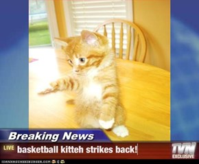 Breaking News - basketball kitteh strikes back!