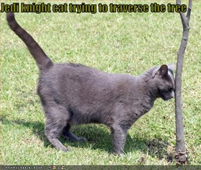 Jedi knight cat trying to traverse the tree