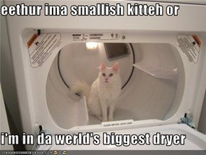 eethur ima smallish kitteh or   i'm in da werld's biggest dryer