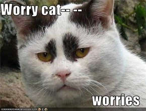 Worry cat-- --                                  worries